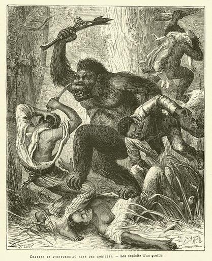 Chasses Et Aventures Au Pays Des Gorilles. Illustration for Journal Des Voyages, 3 February 1878.