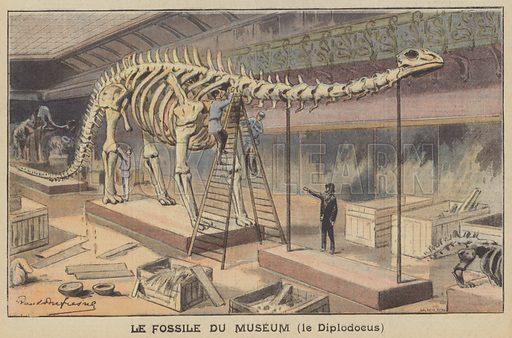 Diplodocus skeleton in a museum. Le Fossile Du Museum, le Diplodocus. Illustration for Le Petit Parisien (Supplement Litteraire Illustre), 10 May 1908.