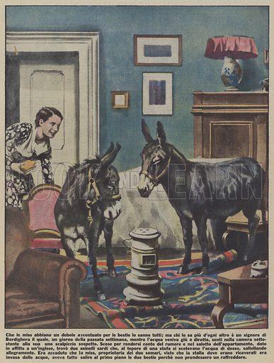 Two donkeys kept in an apartment in Bordighera, Italy. The owner of the donkeys, an Englishwoman who was an animal lover, had broight them indoors after their barn was flooded. Che le miss abbiano un debole accentuato per le bestie lo sanno tutti; ma chi lo sa piu d'ogni altro e un signore di Bordighera il quale, un giorno della passata settimana, mentre l'acqua veniva giu a dirotto, senti nella camera sottostante alla sua uno scalpiccio sospetto. Scese per rendersi conto del rumore e nel salotto dell'appartamento, dato in affitto a un'inglese, trovo due asinelli sardi che, al tepore di una stufa si scotevano l'acqua di dosso, saltellando allegramente. Era accaduto che la miss, proprietaria dei due somari, visto che la stalla dove erano ricoverati era invasa dalle acque, aveva fatto salire al primo piano le due bestie perche non prendessero un raffreddore. Illustration for Illustrazione del Popolo, 2–8 December 1934.