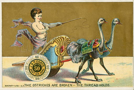 The ostriches are broken-the thread holds