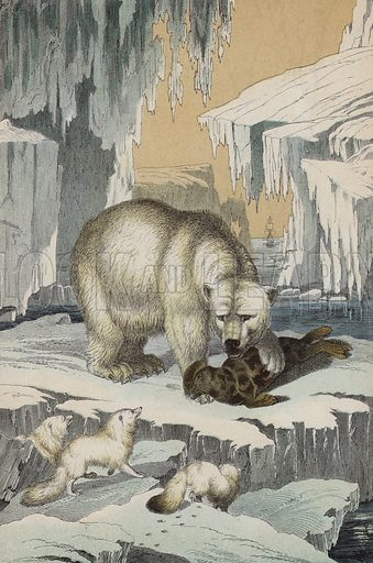 Animals of the region of the North Pole: Polar Bear, Arctic Fox and Hooded Seal. Illustration for The Instructive Picture Book (2nd edn, Edward Stanford, 1877).