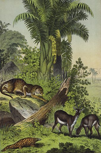 Animals and plants of India: Antelope, Cheetah, Indian Pangolin, Sago Palm. Illustration for The Instructive Picture Book (2nd edn, Edward Stanford, 1877).