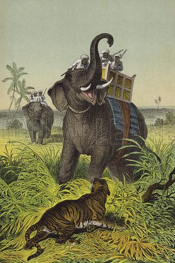Animals and plants of India