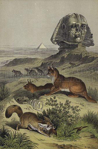 Animals of Egypt