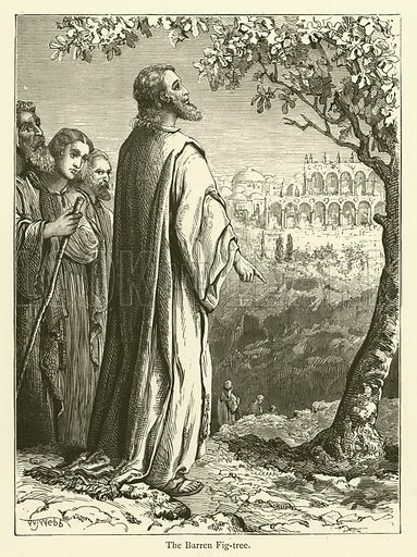 The Barren Fig-tree. Illustration for Bible Pictures by James Weston (Partridge, c 1885).