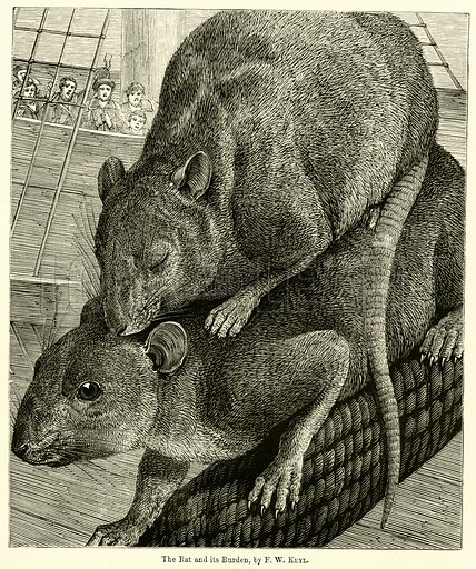 The Rat and its Burden. Illustration for Chatterbox (1869).