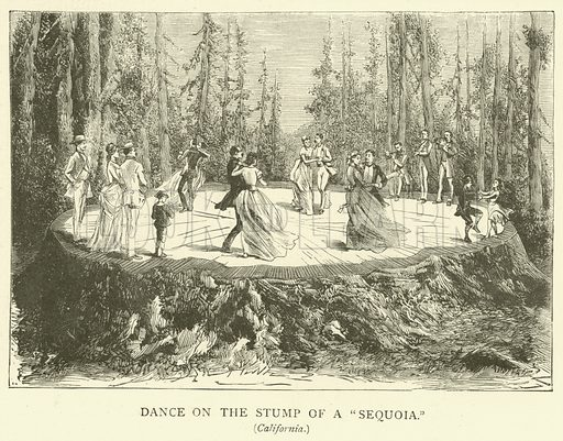 """Dance on the Stump of a """"Sequoia"""". Illustration for The Picture Magazine, 1893."""