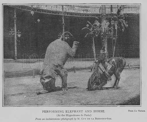 Performing Elephant and Horse. Illustration for The Picture Magazine, 1893.