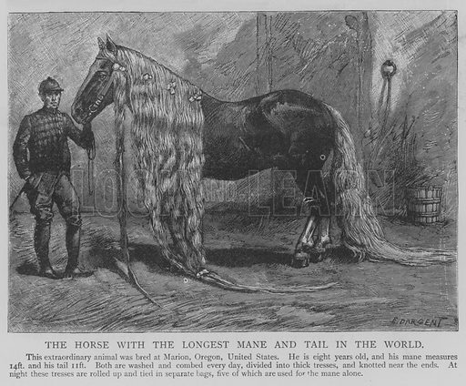 The Horse with the Longest Mane and Tail in the World. Illustration for The Picture Magazine, 1893.