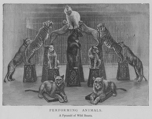 Performing Animals. Illustration for The Picture Magazine, 1893.