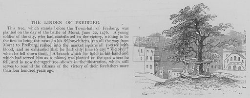 The Linden of Freiburg. Illustration for The Picture Magazine, 1893.