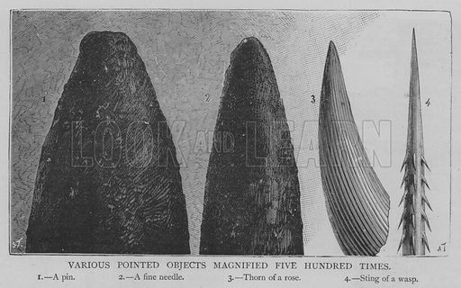 Various Pointed Objects Magnified Five Hundred Times. Illustration for The Picture Magazine, 1893.