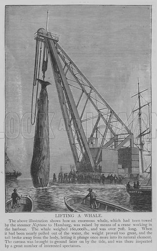 Lifting a Whale. Illustration for The Picture Magazine, 1893.