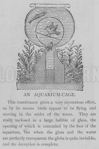 An Aquarium-Cage. Illustration for The Picture Magazine, 1893.