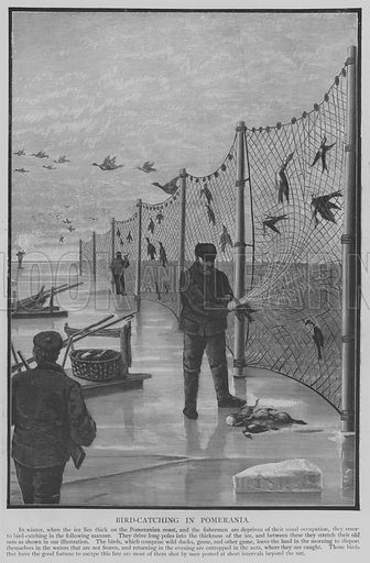 Bird-Catching in Pomerania. Illustration for The Picture Magazine, 1894.