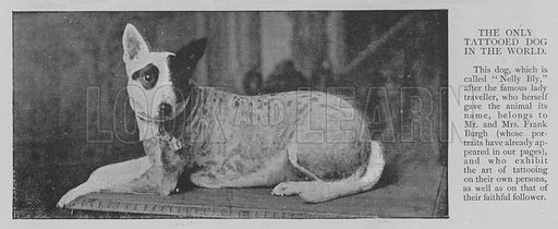 The Only Tattooed Dog in the World. Illustration for The Picture Magazine, 1894.