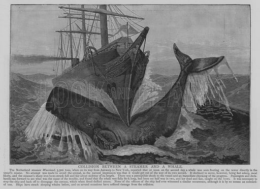 Collision between a Steamer and a Whale. Illustration for The Picture Magazine, 1894.