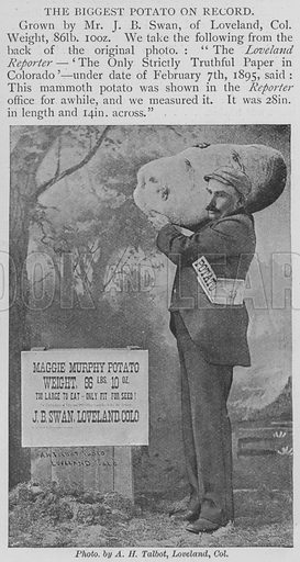 The Biggest Potato on Record. Illustration for The Strand Magazine, 1897.
