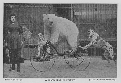 A Polar Bear as Cyclist. Illustration for The Strand Magazine, 1897.