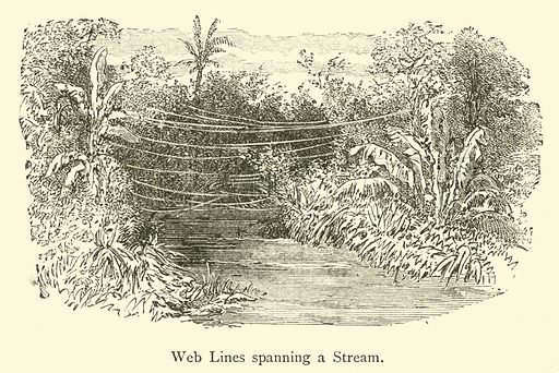 Web Lines spanning a Stream. Illustration for The Intelligence of Animals from the French of Ernest Menault (Charles Scribner, 1872).