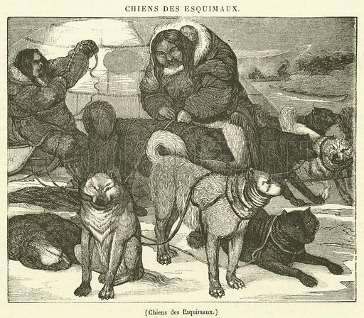 Chiens des Esquimaux. Illustration for Le Magasin Pittoresque (1833).