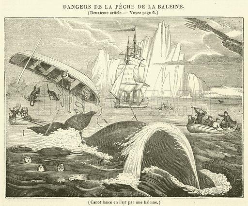 Canot lance en l'air par une baleme. Illustration for Le Magasin Pittoresque (1834).