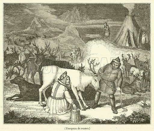 Troupeau de rennes. Illustration for Le Magasin Pittoresque (1834).