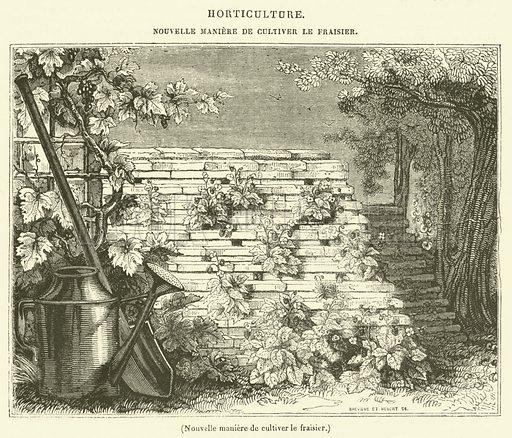 Nouvelle maniere de cultiver le fraisier. Illustration for Le Magasin Pittoresque (1836).