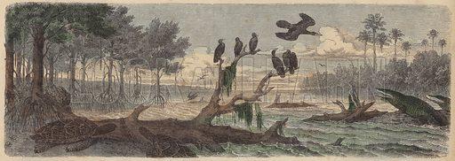 South America: estuary in Guyana. Illustration from Die Welt in Bildern (Braun & Schneider, Munich, 19th Century).