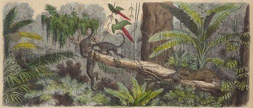 Jungle in Brazil. Illustration from Die Welt in Bildern (Braun & Schneider, Munich, 19th Century).