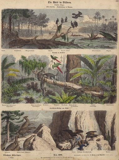 South America: estuary in Guyana; jungle in Brazil; Chilean Andes. Illustration from Die Welt in Bildern (Braun & Schneider, Munich, 19th Century).