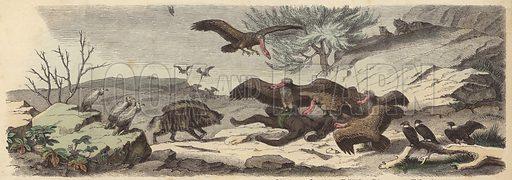Battlefield in the Sahara. Illustration from Die Welt in Bildern (Braun & Schneider, Munich, 19th Century).