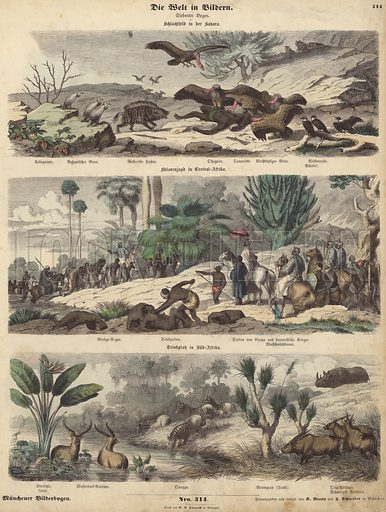 Africa: battlefield in the Sahara; slave hunt in Central Africa; watering hole in South Africa. Illustration from Die Welt in Bildern (Braun & Schneider, Munich, 19th Century).