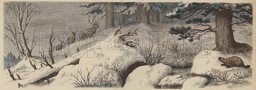 Winter landscape in Canada. Illustration from Die Welt in Bildern (Braun & Schneider, Munich, 19th Century).