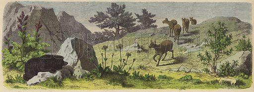Plants and animals of the mountains of Asia. Illustration from Die Welt in Bildern (Braun & Schneider, Munich, 19th Century).