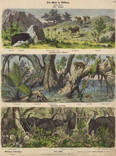 Asia: mountain animals and plants; flooding in eastern India; catching elephants in Ceylon. Illustration from Die Welt in Bildern (Braun & Schneider, Munich, 19th Century).