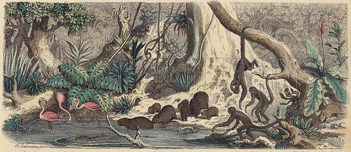 Riverbank in Guiana. Illustration from Die Welt in Bildern (Braun & Schneider, Munich, 19th Century).