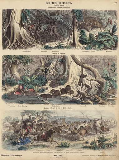 South America: jungle in Brazil; riverbank in Guiana; Indians surprising Gauchos on the Pampas and making off with their herd of cattle. Illustration from Die Welt in Bildern (Braun & Schneider, Munich, 19th Century).