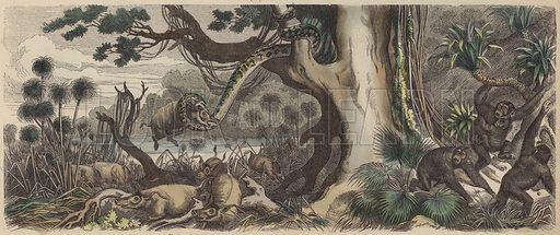 The coast of Guinea. Illustration from Die Welt in Bildern (Braun & Schneider, Munich, 19th Century).