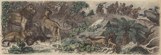 South Africa. Illustration from Die Welt in Bildern (Braun & Schneider, Munich, 19th Century).