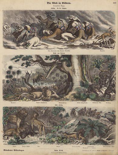 Africa: a caravan caught in a sandstorm in the Sahara; the coast of Guinea; South Africa. Illustration from Die Welt in Bildern (Braun & Schneider, Munich, 19th Century).