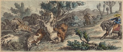 Lassoing wild horses in New Mexico. Illustration from Die Welt in Bildern (Braun & Schneider, Munich, 19th Century).