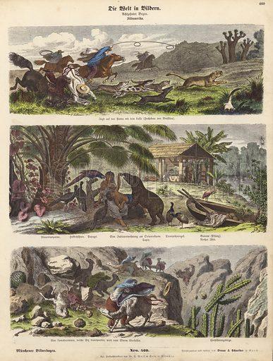 South America. Illustration from Die Welt in Bildern (Braun & Schneider, Munich, 19th Century).