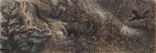 Wildlife of northern Russia. Illustration from Die Welt in Bildern (Braun & Schneider, Munich, 19th Century).