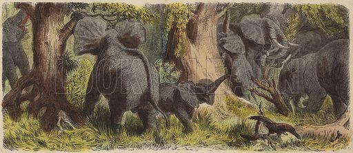 Herd of elephants in an African jungle. Illustration from Die Welt in Bildern (Braun & Schneider, Munich, 19th Century).