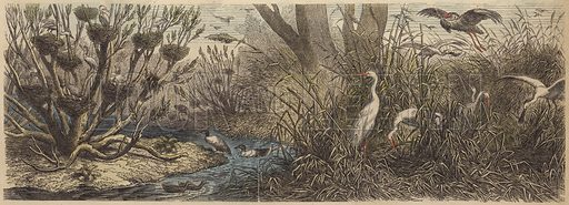 Colony of waterfowl on the River Tisza in Hungary. Illustration from Die Welt in Bildern (Braun & Schneider, Munich, 19th Century).