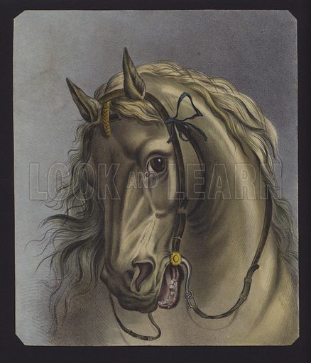 Portrait of a horse.