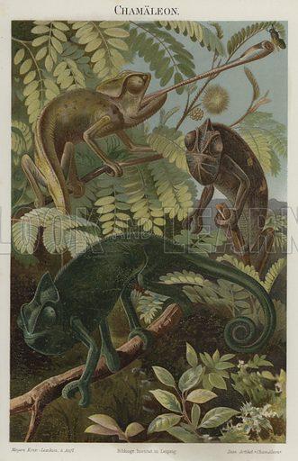Chameleons. Illustration from Meyer's Konversations-Lexicon, c1895.