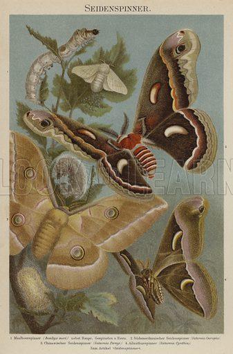 Silkmoths. Illustration from Meyer's Konversations-Lexicon, c1895.