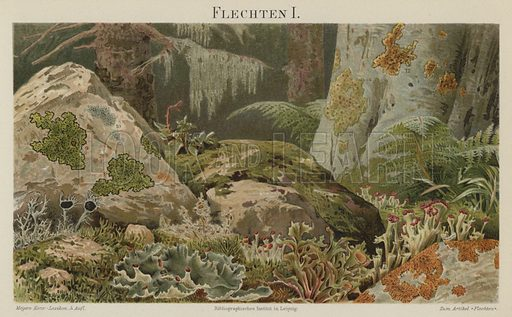 Lichens. Illustration from Meyer's Konversations-Lexicon, c1895.